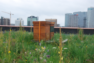 Launch of Sempergreen white paper: 'Building for Biodiversity'