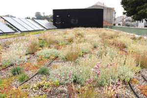 S. Dinis Green Roofs
