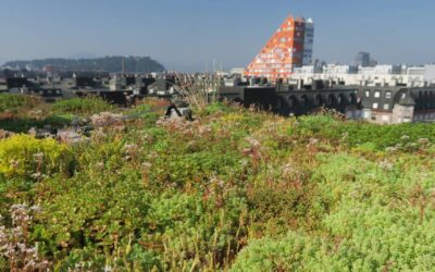 """In the press 