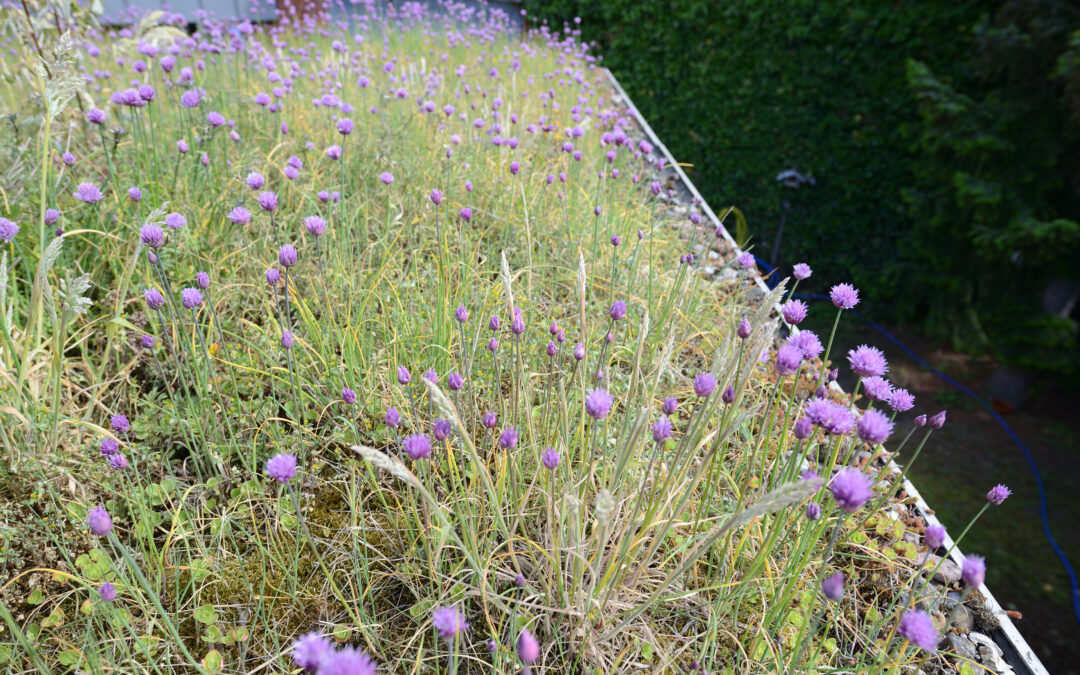 European Parliament calls for green roofs targets to restore urban biodiversity