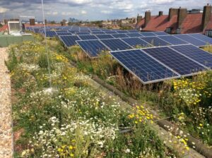 Study confirms green roofs' positive impacts on solar panels
