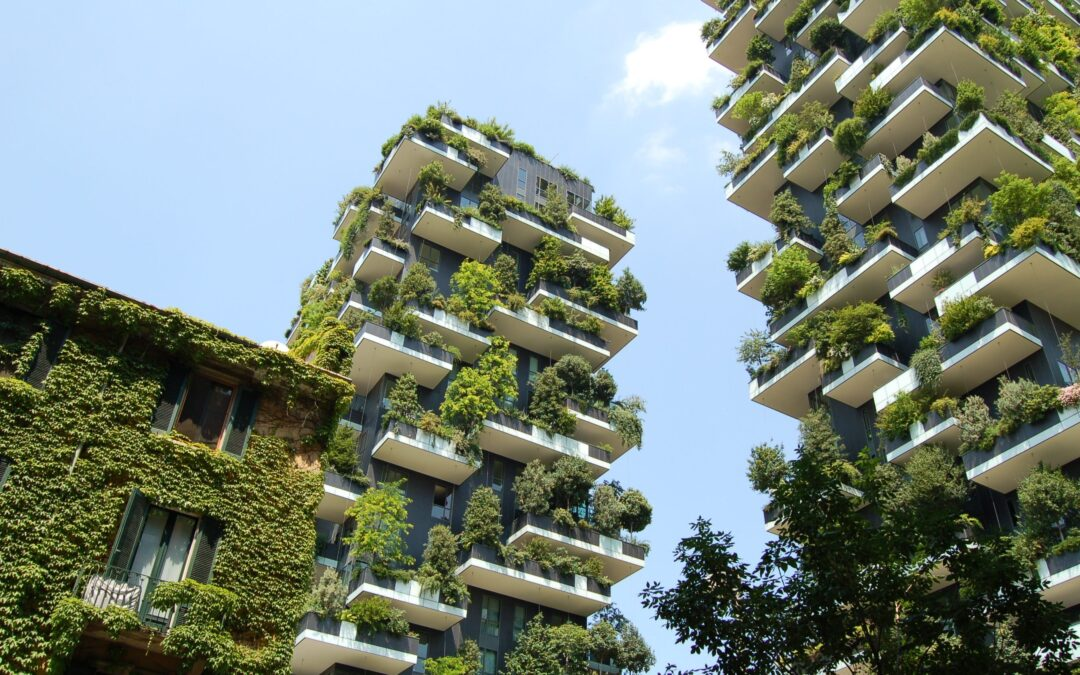 """A new model of """"urban forestation"""" to reduce energy costs"""